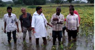 रामगंजमंडी में खरीफ की 70 फीसदी फसलें चौपट